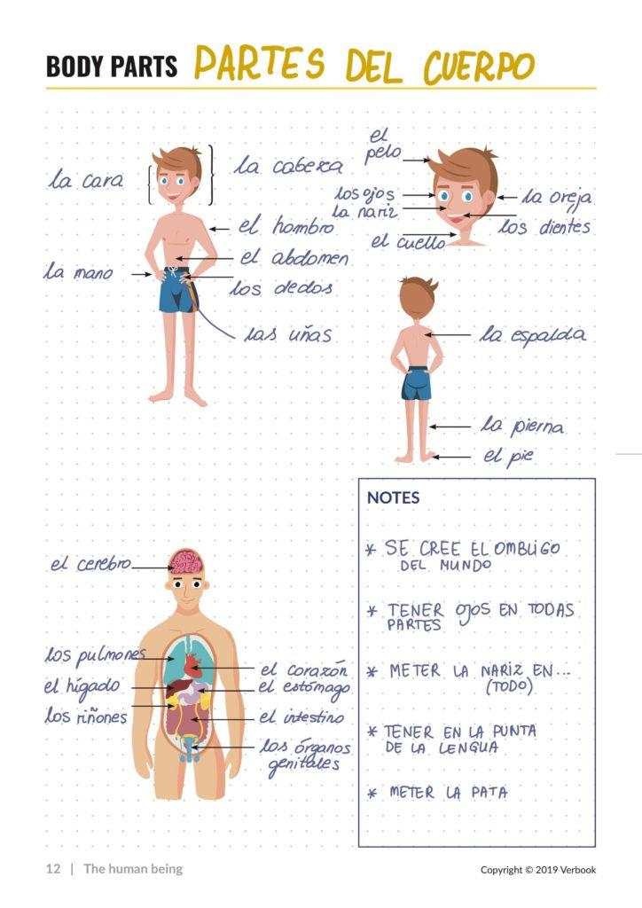 Partes del cuerpo en español